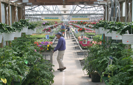 A Look at Our May Greenhouse Selection