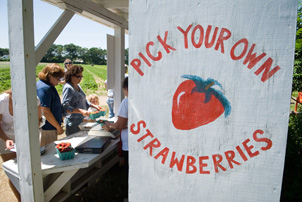 Strawberry U-Pick Stand