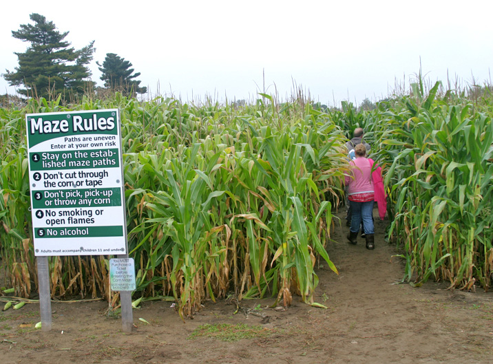 Corn Maze entry B